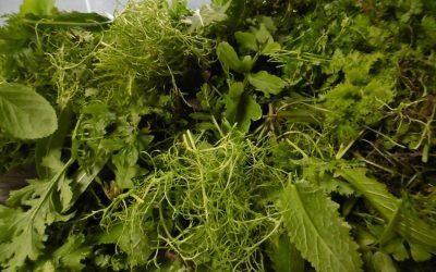 The 2016 salad season has begun!